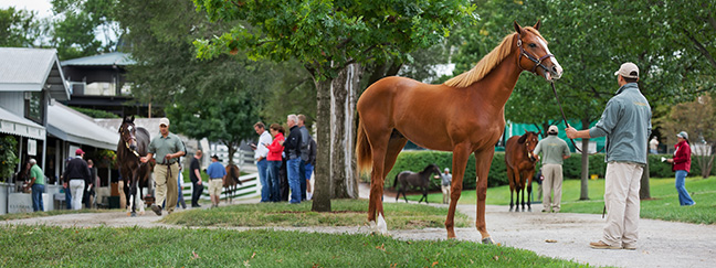 keeneland-september-yearling-sale-thoroughbreds