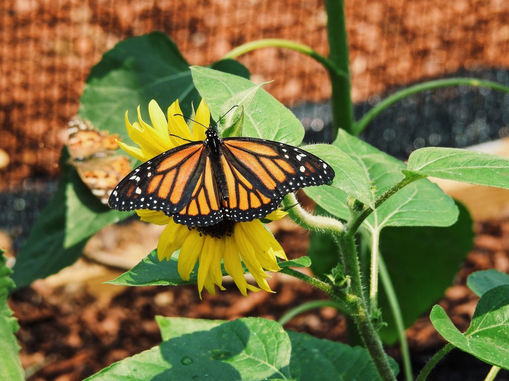 butterfly-greenhouse-frankfort-ky-adventures-lexington